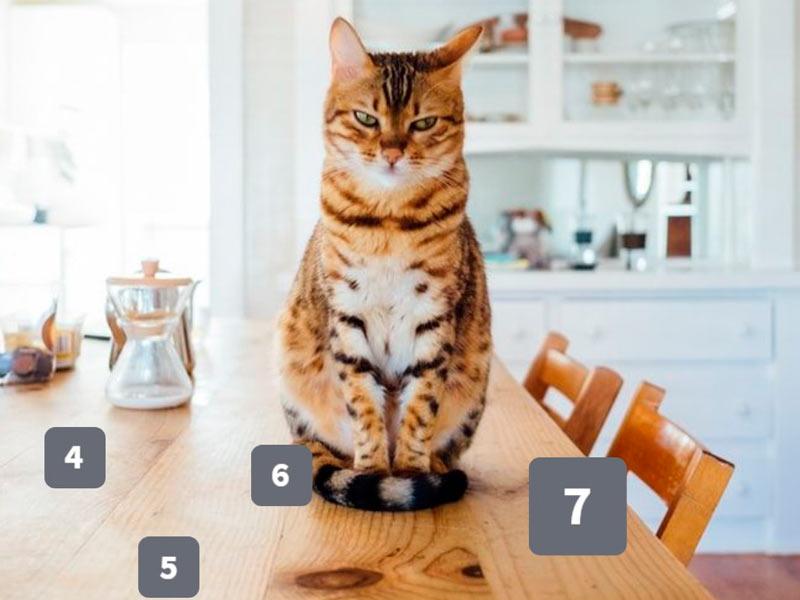 zdjęcie kota siedzącego na stole